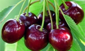 Bliži se sezona - VIŠNJE - za dobar san i zdravo srce - iskoristite sve benefite